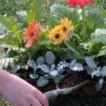 Ecoinvenzioni: un sito web per lo scambio gratuito delle piante
