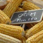 Agricoltura: no mais Ogm in Italia, firmato il decreto