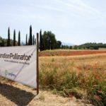 Operation Pollinator: Syngenta a difesa degli insetti impollinatori