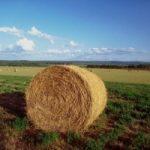 Expo rurale: a Firenze il meglio dell'agricoltura italiana