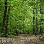 Foreste: dagli alberi arriva 1,6% dei consumi energetici nazionali