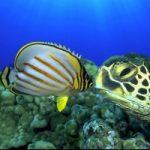 Mari troppo acidi: pesci a rischio