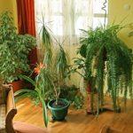 Quali piante scegliere per gli interni della nostra casa?