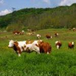 Agricoltura biologica in crescita