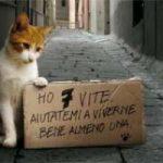 Animali, al via la campagna di Legambiente contro  maltrattamenti