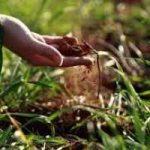 Da rifiuti a compost, grazie ai lombrichi