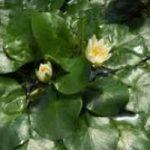 Rubata una pianta rara dai Kew Gardens