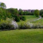 Vivere vicino ad un parco cancella lo stress