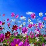 E' Primavera. Oggi l'Equinozio che porta la bella stagione. Video