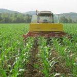 Freddo: allarme per le coltivazioni