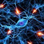 Nasce la prima mappa dei geni del  cervello