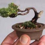 Piante: come creare un micro bonsai