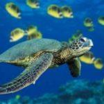 Le tartarughe beneficiano dei cambiamenti climatici