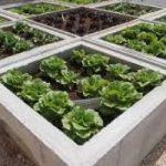 Sette regole per un orto sano e bello