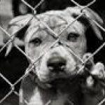200 euro per 3 anni, se adotti un cane