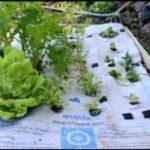 Ecoinvenzioni: il tappeto che aiuta a coltivare l'orto in casa