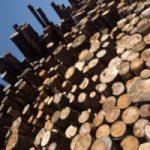 Biomasse: l'ENEA brevetta un nuovo impianto di gassificazione