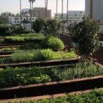 Le fattorie urbane si costruiscono sopra i tetti delle fabbriche dismesse