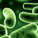 Origine dell'infezione: un super-test rapido che scova 800 batteri