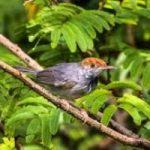 Rapporto Wwf, scoperte 367 nuove specie nel Greater Mekong