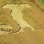 Stati Membri Ue liberi di coltivare Ogm