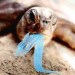 Troppa plastica in mare: fauna marina in pericolo