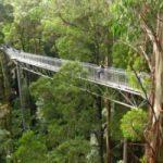 In Australia, un ponte per passeggiare tra le cime degli alberi
