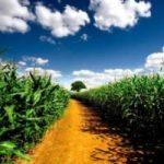 Ambiente: un drone elettrico bombardera' il parassita del mais