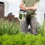 A Milano, l'orto urbano per coltivare cereali ed erbe aromatiche a km zero