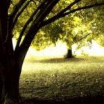 Lo sai che gli alberi salvano 850 vite all'anno?