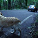 Diminuiscono abbandoni animali domestici
