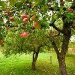Frutteti sostenibili, con un nuovo metodo di coltivazione