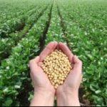 Tribunale messicano boccia l'autorizzazione alla semina di soia Ogm