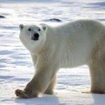 Greenpeace: una pedalata polare per difendere l'Artico