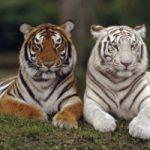 Oggi e' la Giornata mondiale degli animali