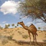 In Medio Oriente la flora resiste ai cambiamenti climatici