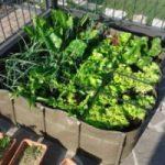 Un corso per imparare a fare l'orto in casa
