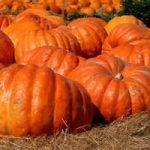 Ricetta, zuccolotti di Halloween