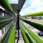 Le alghe? Si coltivano sul cavalcavia per ridurre l'inquinamento in autostrada