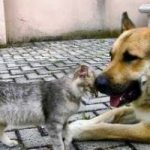 Allergie: gatti più pericolosi dei cani