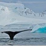 Antartide: ancora nessun accordo su specie protette