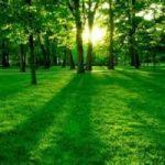 243mila assunzioni dalla Green Economy
