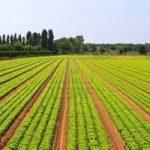 L'agricoltura intensiva altera gli equilibri terrestri
