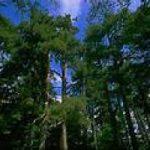 Sila: fermiamo la strage di alberi secolari
