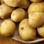 Usa: arriva la patata Ogm, anti-cancro