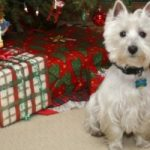7 consigli per la salute di cani e gatti durante le feste