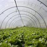 Agricoltura più efficiente e meno sprecona
