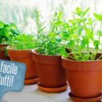 Ecoinvenzioni: il vaso robot che sposta le piante verso la luce del sole
