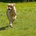 5 cani morti a Roma per colpa di polpette avvelenate