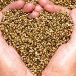 7 semi da aggiungere alla tua dieta: buoni e salutari